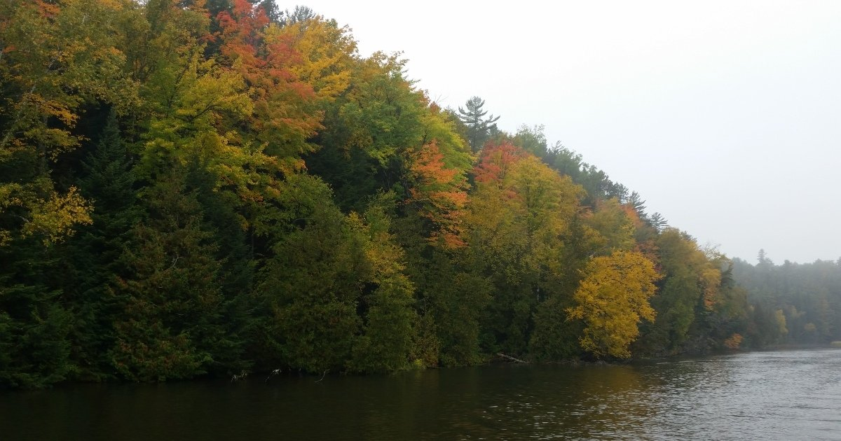 Au Sable Canoe Rental - Gorgeous Fall Color!